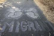 Chalk art in Berkeley, Calif., in September 2012. (Flickr/Quinn Dombrowski)