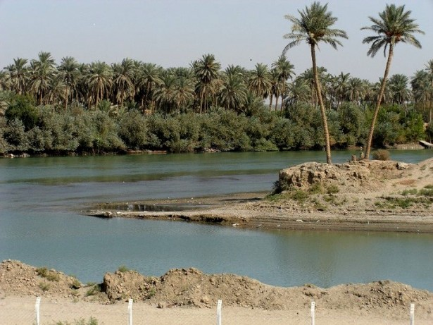 Palm trees along Euphprates river in Najaf, Iraq. (WNV/Cathy Breen)