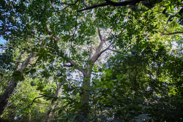 The forests of La Bendición contains a breadth of biodiversity that communities continue to protect. (WNV/Jeff Abbott)